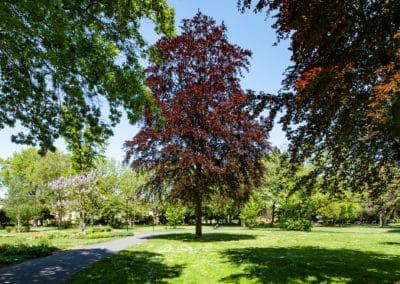 Grün im Stadtpark